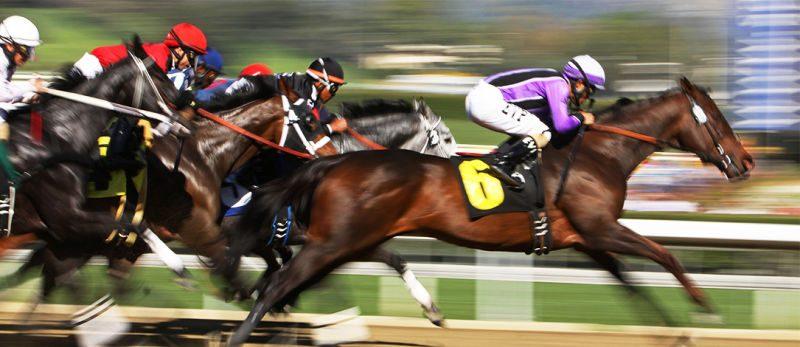แนะนำการเดิมพันแข่งม้า